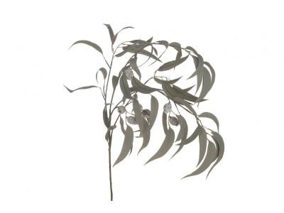 Rośliny sztuczne Eukaliptus